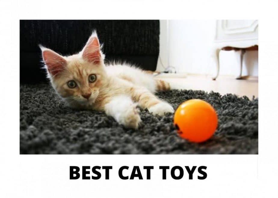 Best Maine Coon Cat Toys