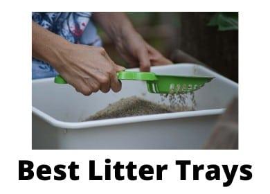Best Maine Coon Cat Litter Trays