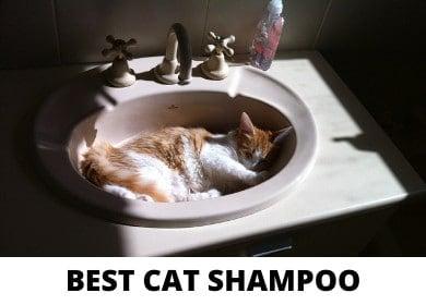 Best Maine Coon Cat Shampoo